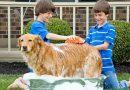Recomiendan que los niños tengan un perro