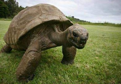 Muere a los 344 años la tortuga más vieja de África
